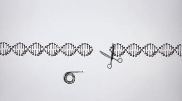 Knippen en plakken in het DNA: Wat is CRISPR-Cas?