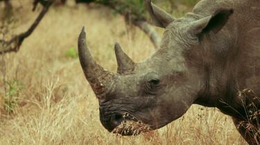 Ersin in Wonderland in de klas: Kruger park, Zuid-Afrika