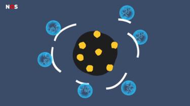 Waarom werkt zeep tegen virussen?