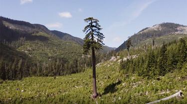 Tegenlicht in de klas: Het belang van bossen