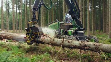 Waarom moeten bomen soms gekapt worden?: Ruimte voor biodiversiteit