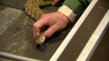 Wat gebeurt er met slangengif?