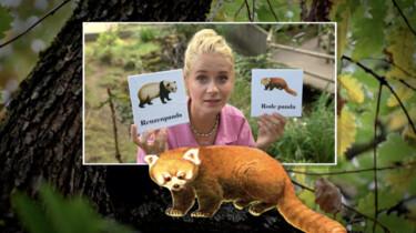 Het Klokhuis: Rode panda