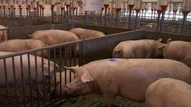 Nieuwsuur in de klas: De invloed van de landbouw op de maatschappij