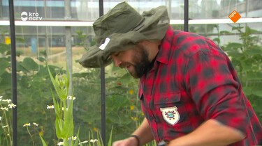 Beestenbrigade: Insecten helpen