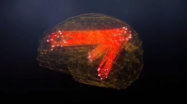 De Kennis van Nu in de klas: De werking van de hersenen
