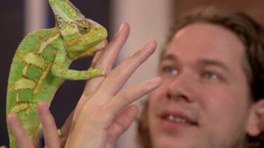 Het Klokhuis: Reptielen