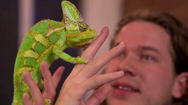 Wat maakt een reptiel een reptiel?: Oeroude dieren met schubben