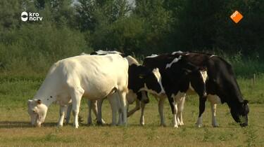Beestenbrigade: Hete koeien