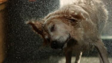 Hoe schudt een hond zich droog?
