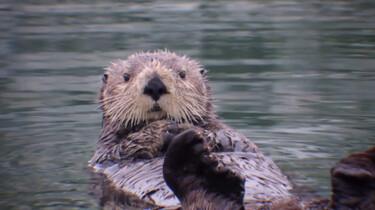 Waar leeft de otter in Nederland?