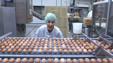 Hoe wordt eipoeder gemaakt?: Ei voor in beschuit, mayonaise, tandpasta en zelfs shampoo