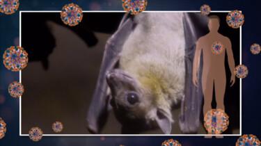Hoe ontstaat een nieuw virus?: Aangepaste virussen van dier naar mens