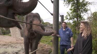 De poep van een Aziatische olifant