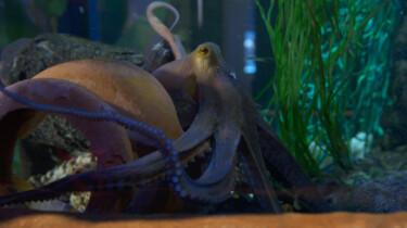 Poep van een octopus