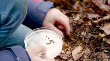 Hoe help je insecten de winter door?: Kleine opruimers in de natuur