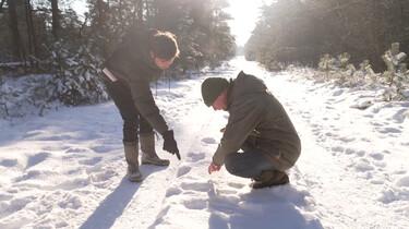 Sporen in de sneeuw: Op zoek naar sporen van reeën, hazen en vossen
