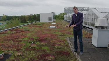 EenVandaag in de klas : Groen dak