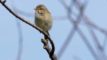 Vroege Vogels in de klas : Zangvogels in de heg