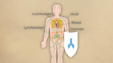 Wat is je immuunsysteem?