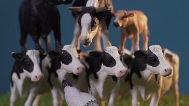 Keuringsdienst van Waarde in de klas : Ziektes van dieren naar mensen