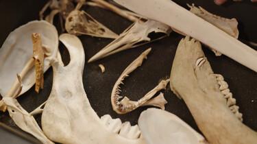 Lou en haar bottenverzameling