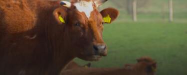 Beestenbrigade: Wilde koeien