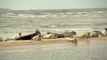 Hoe gaat het met de zeehond in Nederland?