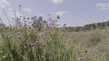 Wat zijn de gevolgen van langdurige droogte?: De impact van hitte op de natuur