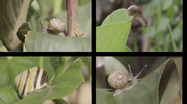 Hoe past de tuinslak zich aan aan klimaatverandering?: De evolutie van de tuinslak