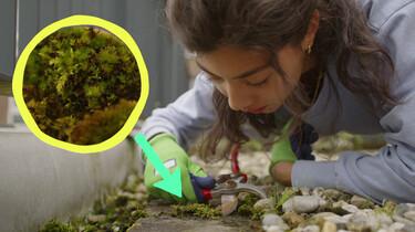 Het beerdiertje: Een schattige naam voor een piepklein bodemdiertje