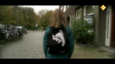 Het Klokhuis: Kindermishandeling: Geweld