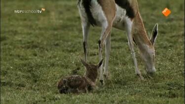 Focus op biologie: Dieren en hun omgeving