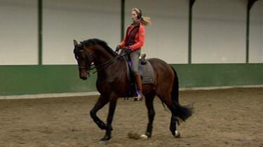 Paardrijden met Anky van Grunsven