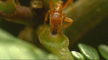 Mieren in een boom