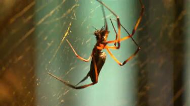 Kruipen als een spin