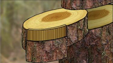 De stam van een boom