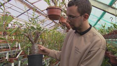 Planten in extreme omstandigheden