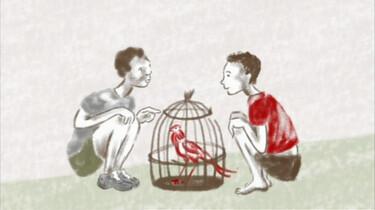 Papegaaien liegen niet