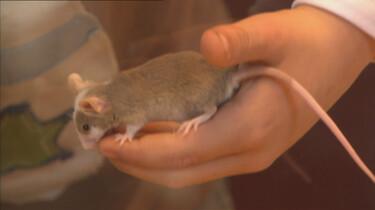 Zo klein als een muis