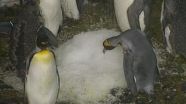 Het pinguïnverblijf