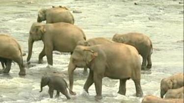 Een bad voor olifanten