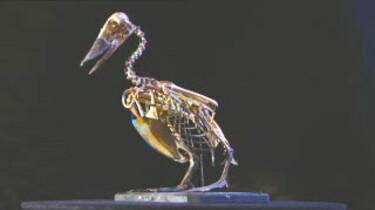 Het skelet van een vogel