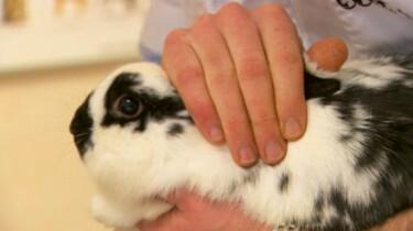 Inentingen voor je huisdier