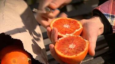 Rode sinaasappels