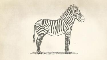 Clipphanger: Waarom hebben zebra's strepen?