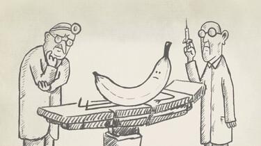 Clipphanger: Waarom zijn bananen krom?