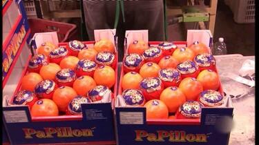 Waar komen sinaasappels vandaan?