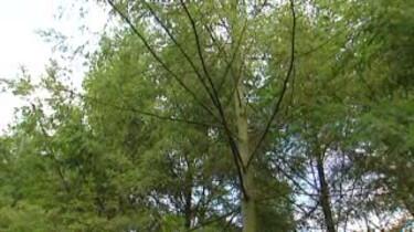 Kringloop in het bos