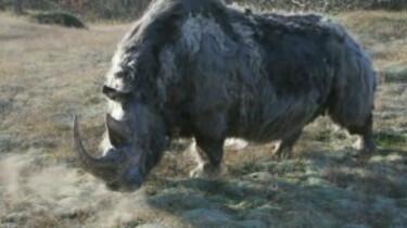 Kies van de wolharige neushoorn
